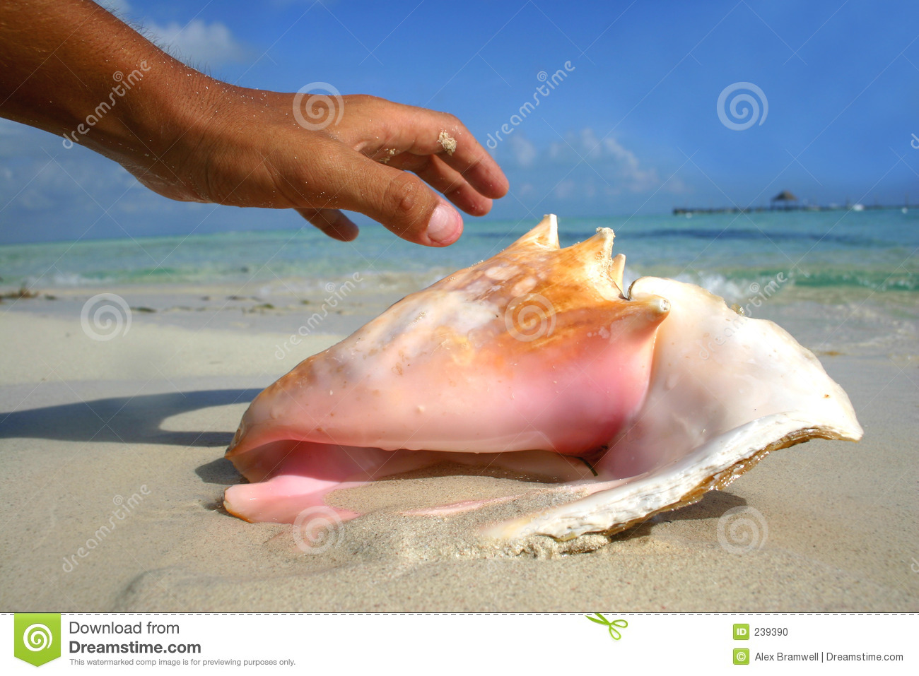 Hand and Conch