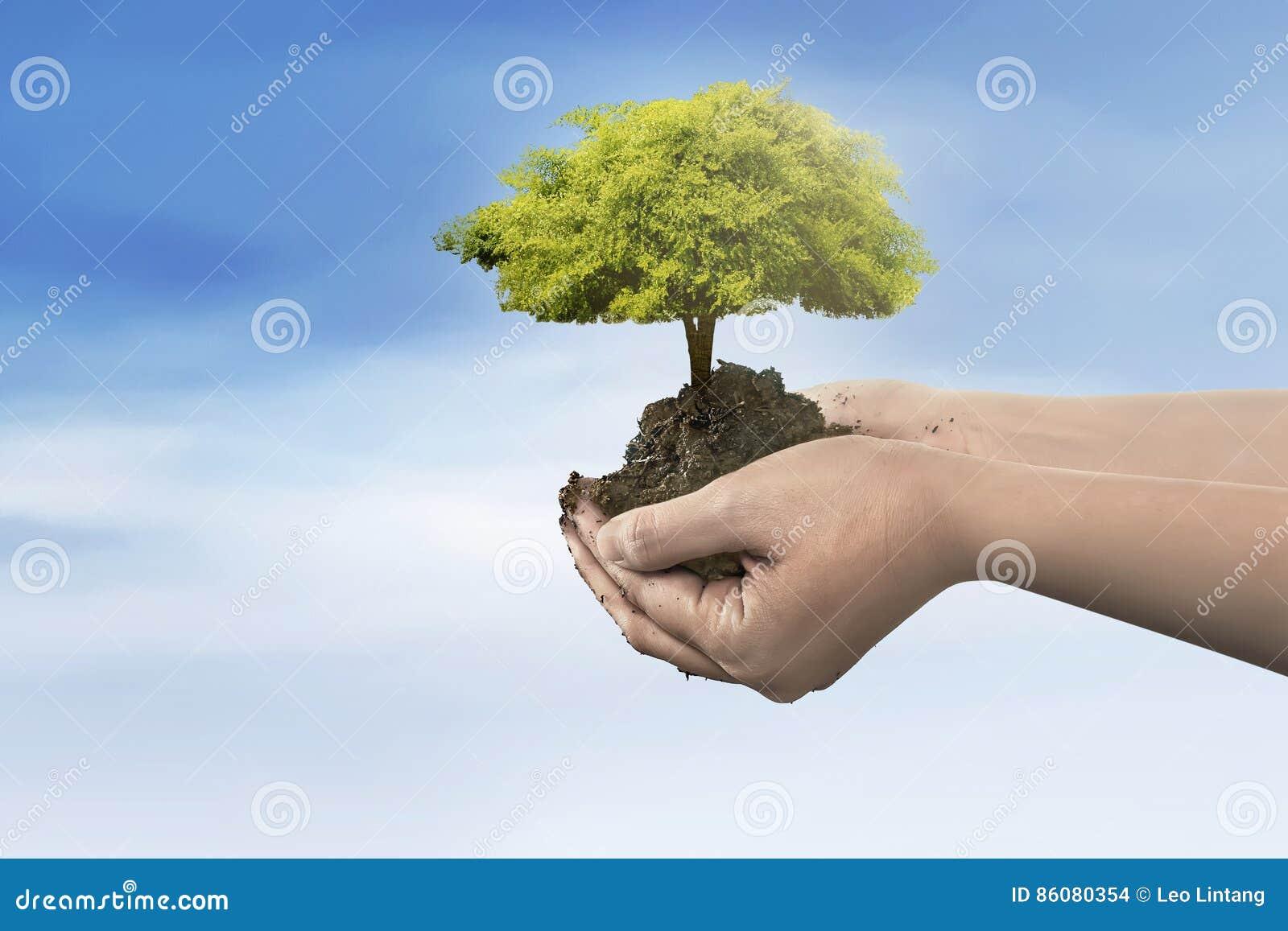 Hand, die Baumanlage auf Boden hält