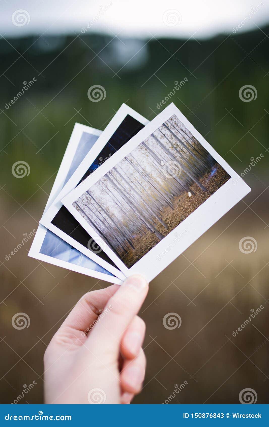 Hand die drie uitstekende onmiddellijke filmfoto s van aard houden