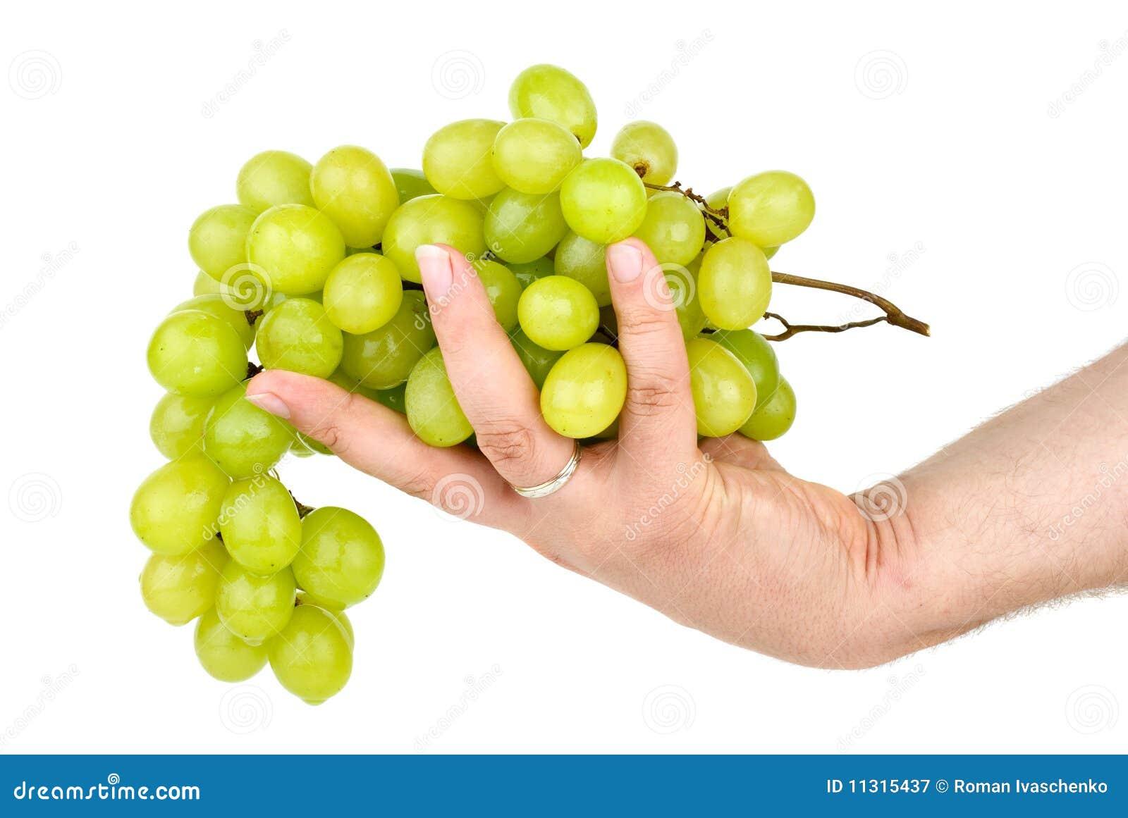 Hand, die grüne Trauben anhält. Getrennt
