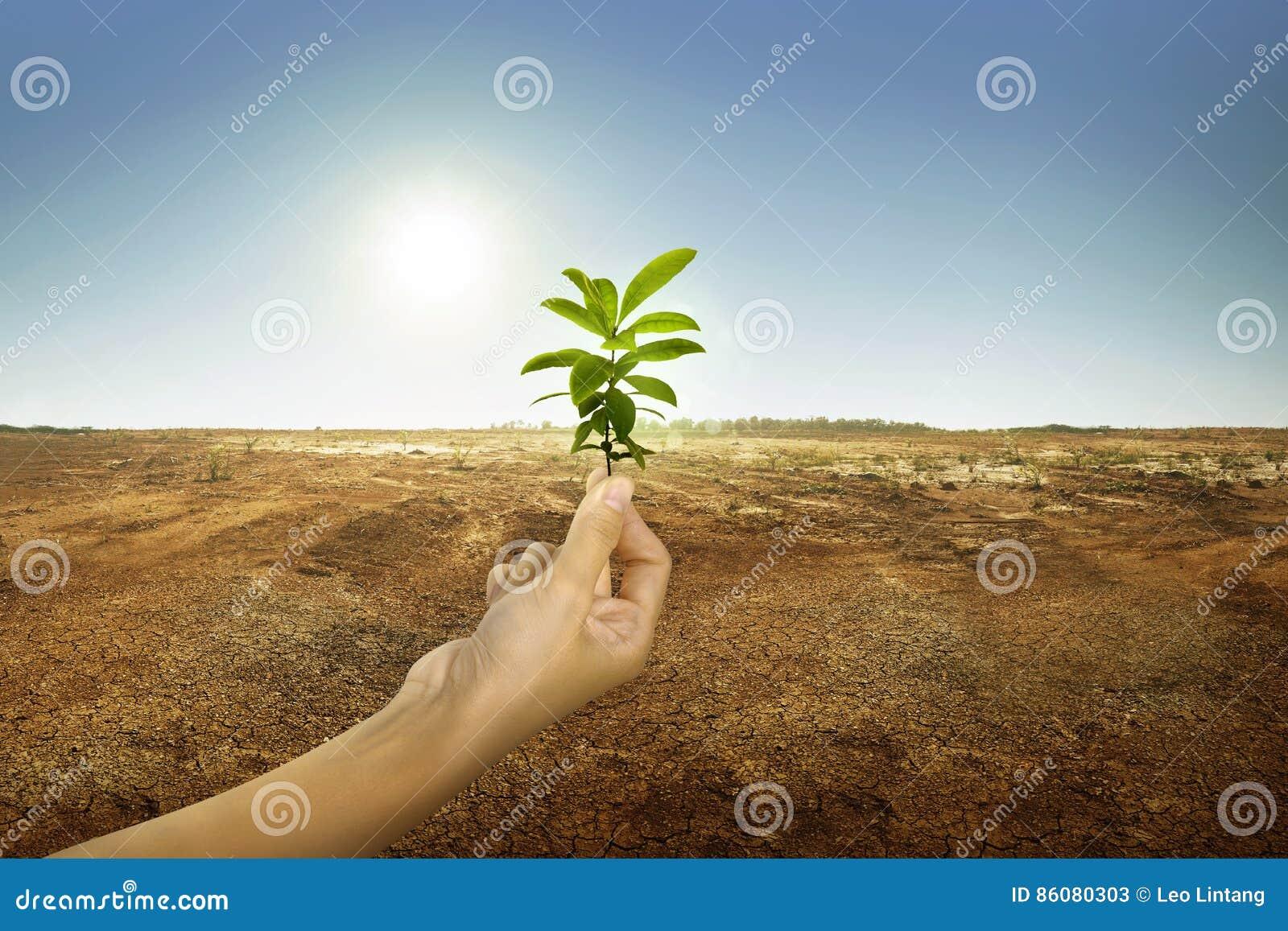 Hand, die Grünpflanze mit Sonnenlicht hält
