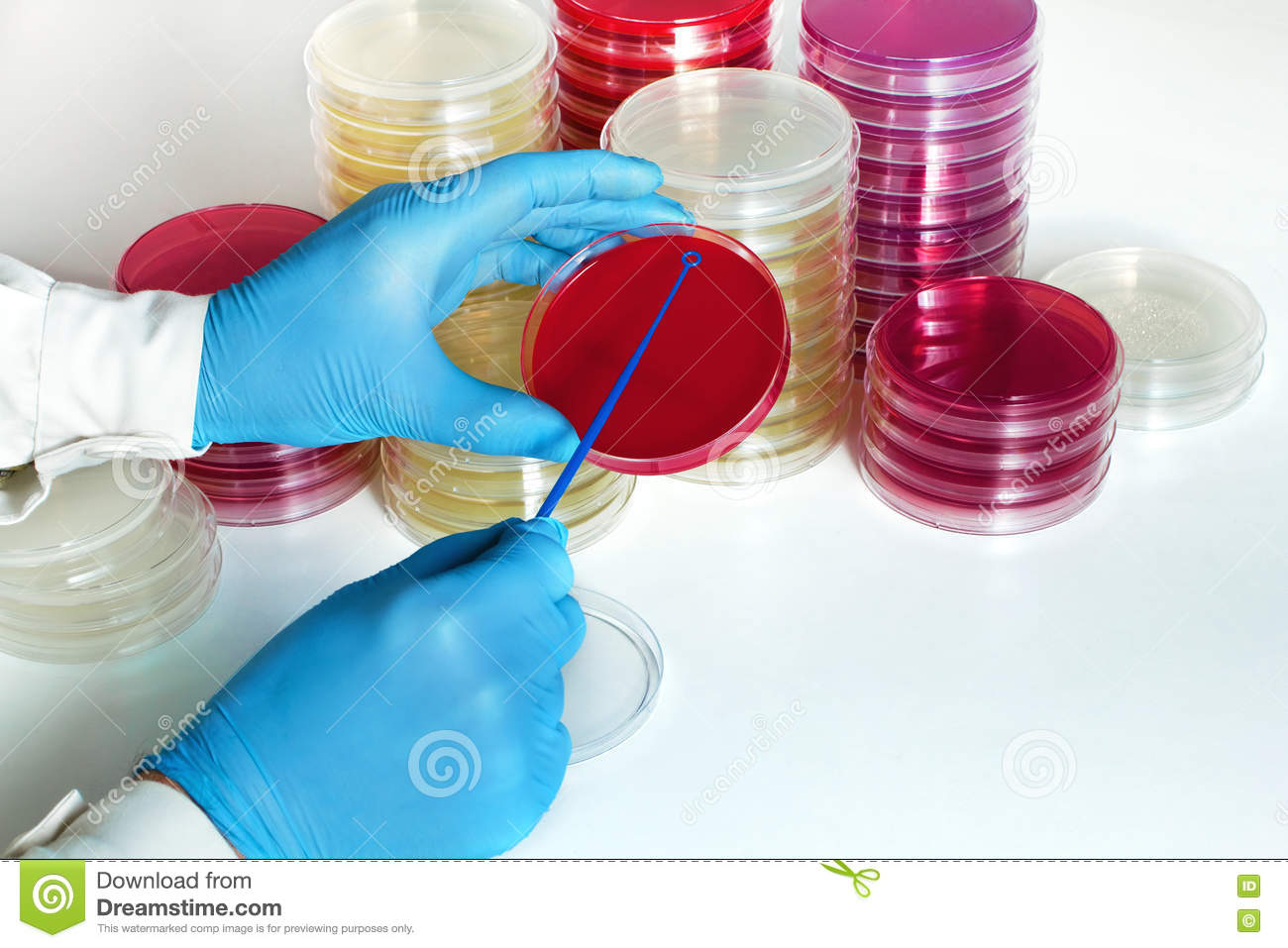 urine culture and urinalysis biology essay Clinical urine tests are various tests of urine for diagnostic purposes the most common is a urinalysis ( ua ), one of the most common methods of medical diagnosis  [1] the word is a portmanteau of the words urine and analysis  [2].