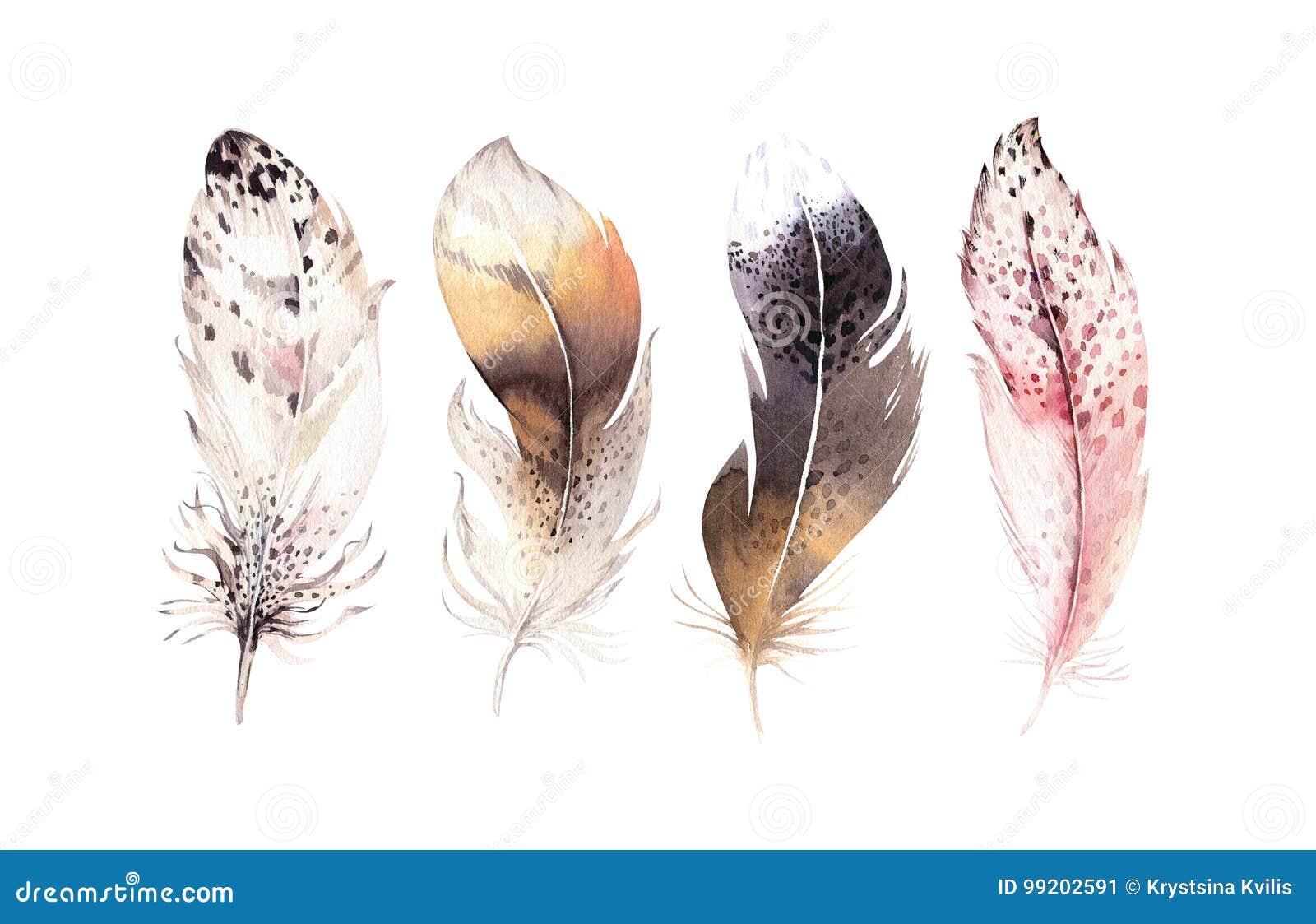 Hand dragen uppsättning för fjäder för vattenfärgmålningar vibrerande Boho stilvingar Illustration som isoleras på white Fågelflu
