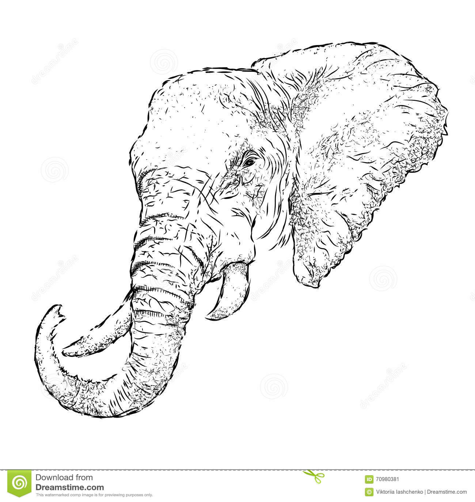 Hand Draw Elephant Portrait Hand Draw Vector Illustration