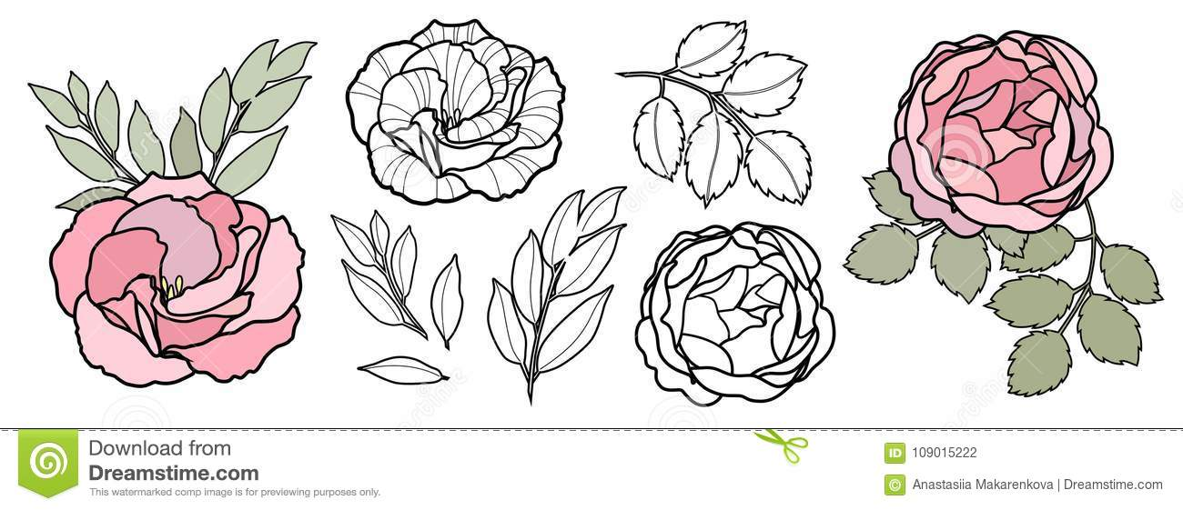 Hand Draw Line Vector Flowers Set For Card Peony Rose
