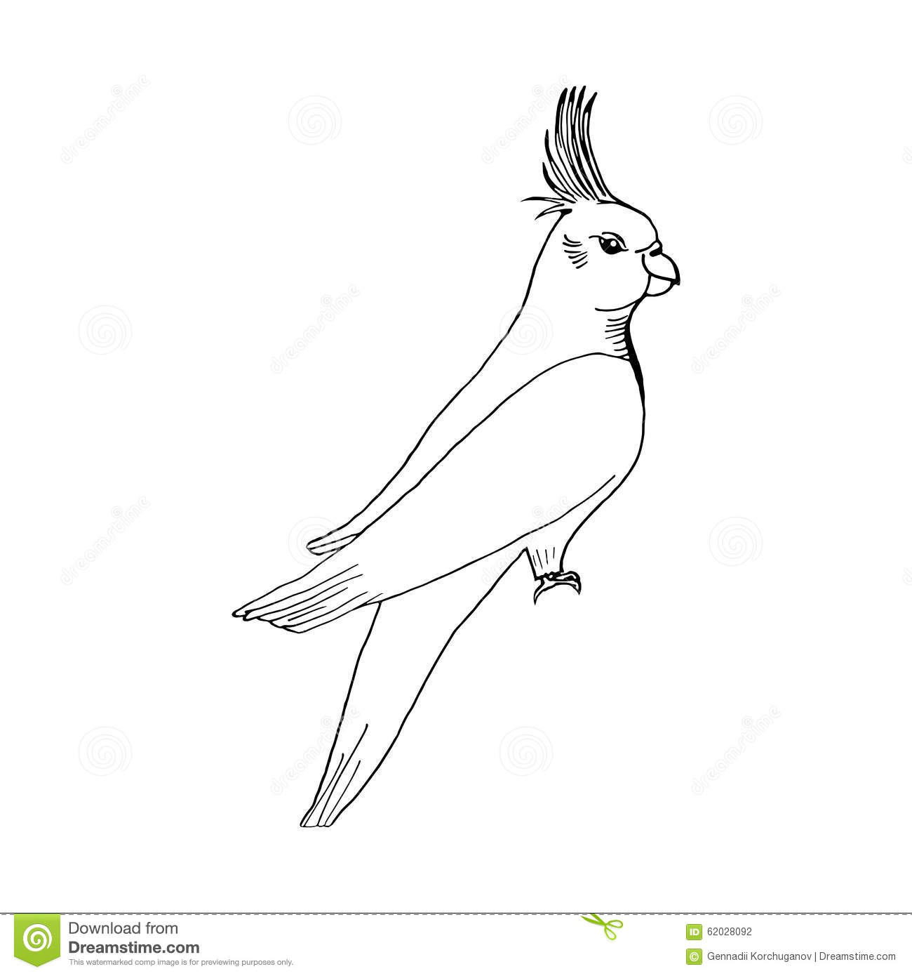 Hand Draw Parrot Sketch Style On A Black White Stock