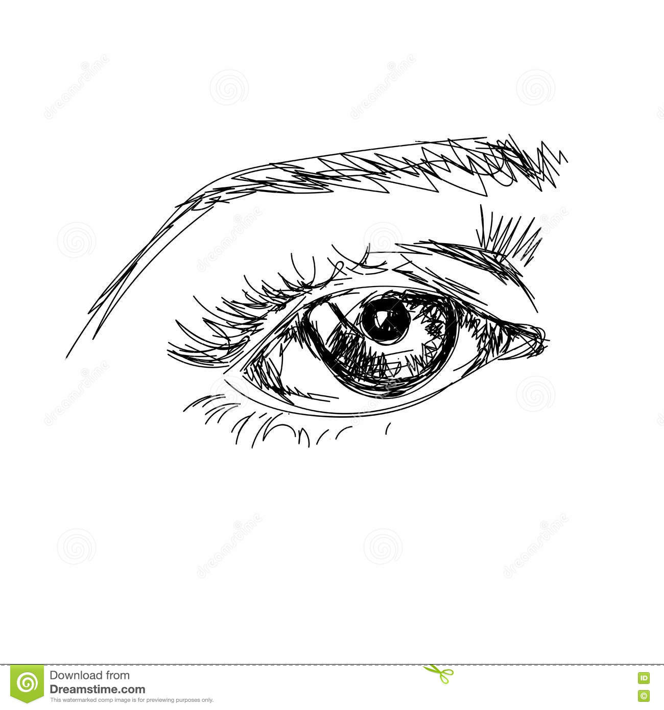 Hand Draw Scetchy Big Eye With Brow On The White Background Stock