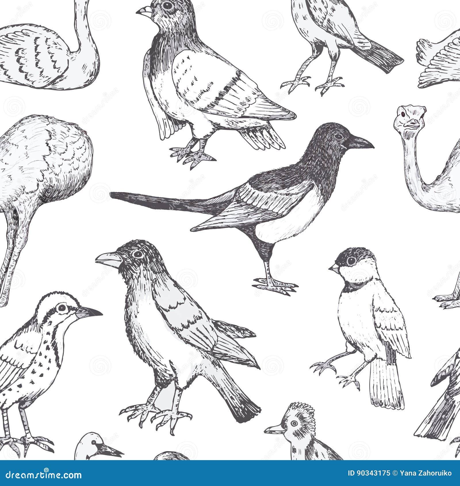 Hand draw vector birds