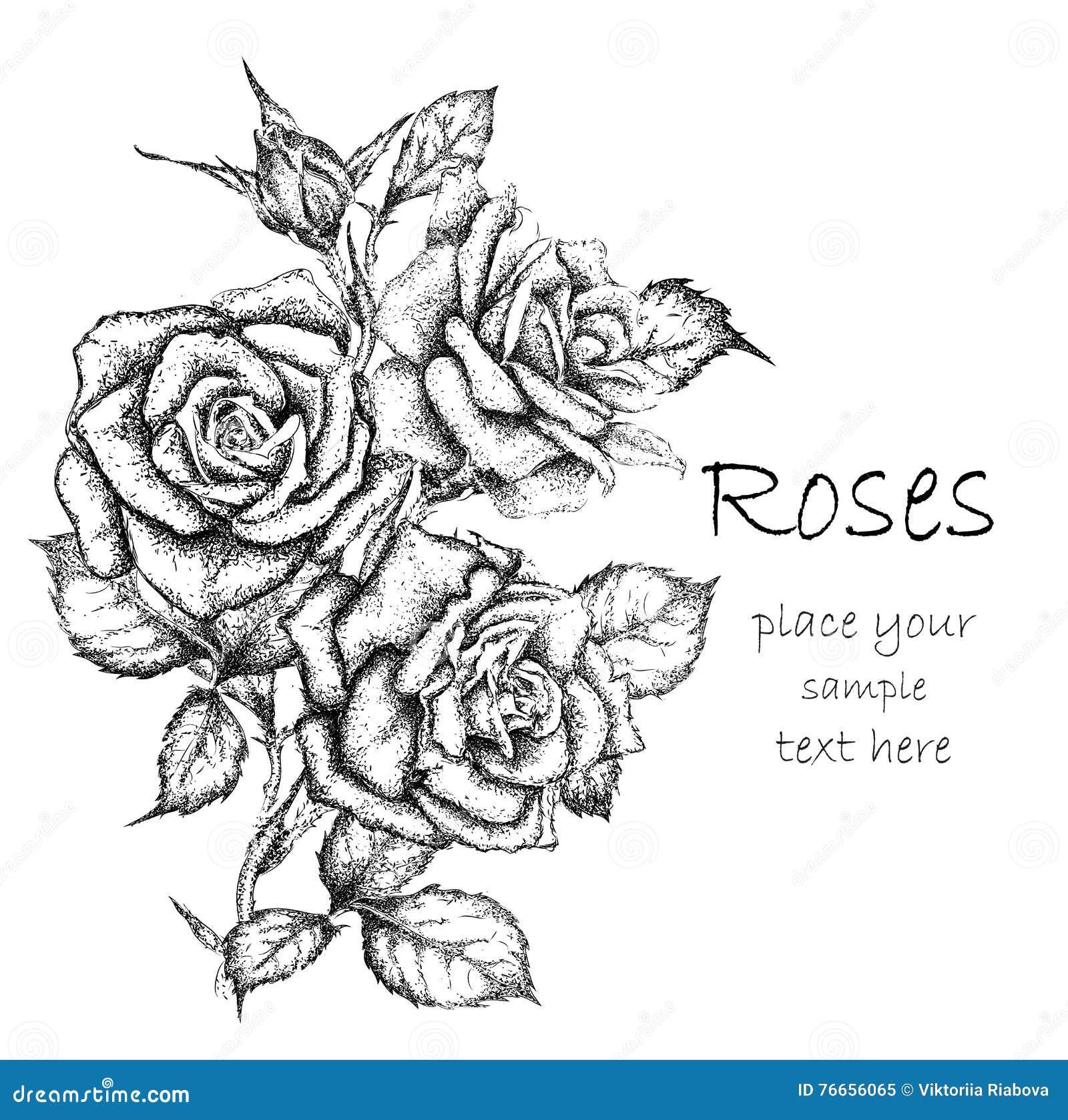 Hand Draw Vintage Rose...