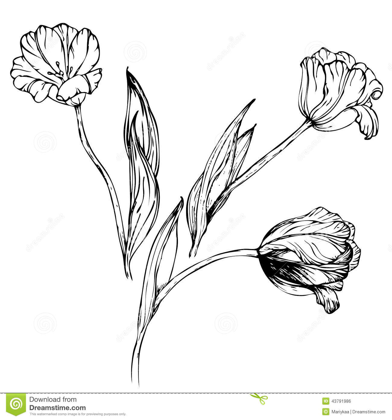 Hand Drawing Black And White Tulips Flowers Stock Vector