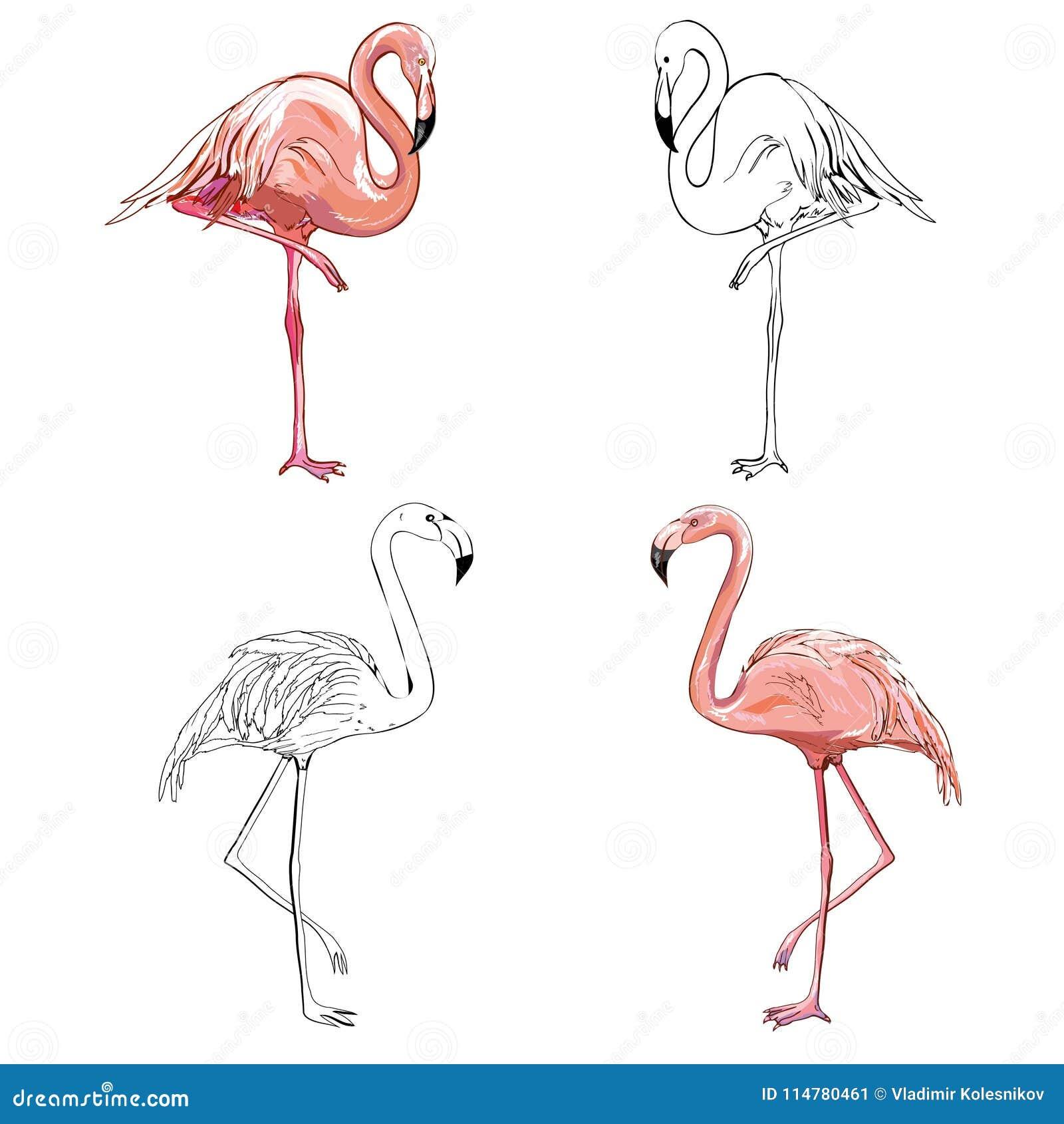 Hand drawing flamingos vector illustration stock vector