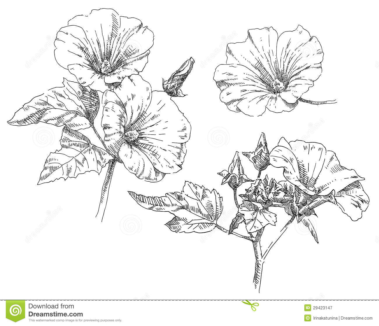 Drawing Flowers Hand drawing flower