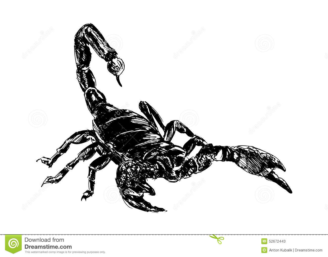 Hand drawing scorpion stock vector image of side graphic 52672443 Drawing images free download