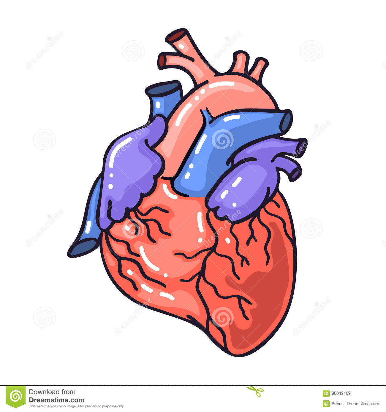 Hand Drawing Sketch Anatomical Heartrtoon Style Vector