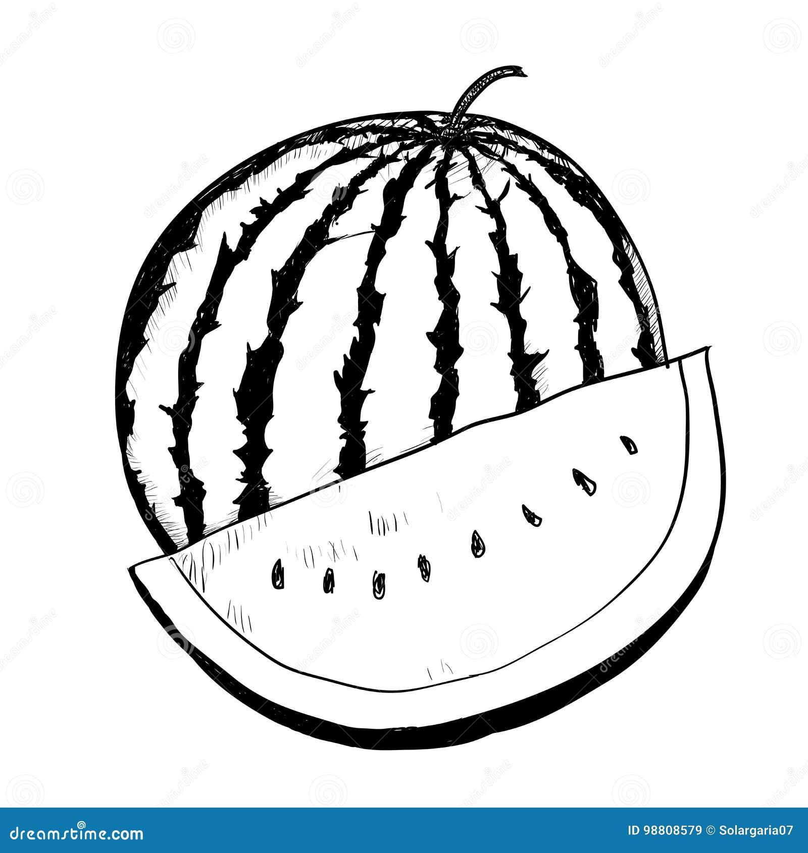 Hand Drawing Watermelon Vector Drawn Illustration Stock