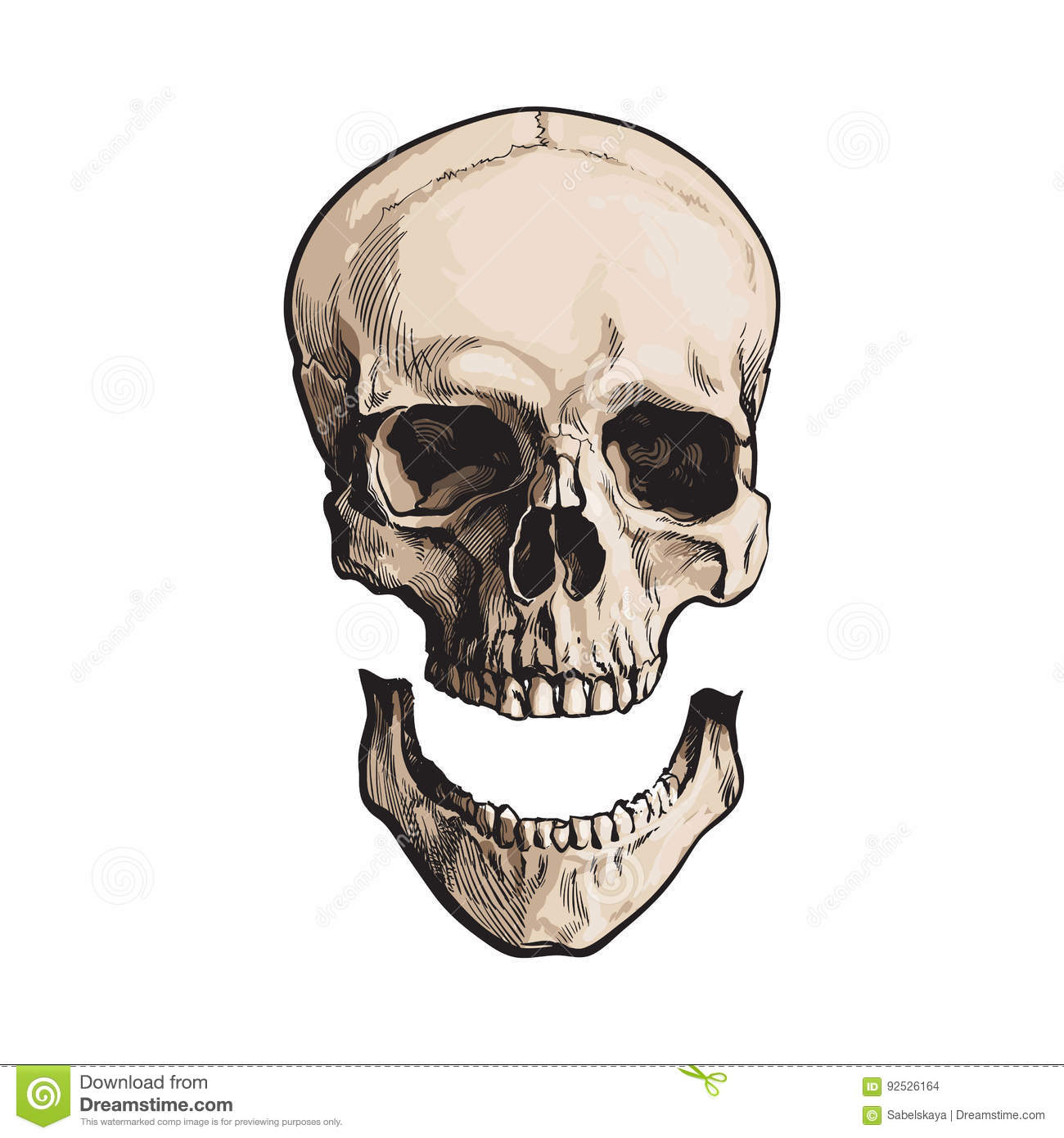 Hand Drawn Anatomical Human Skull With Separated Lower Jaw Jawbone