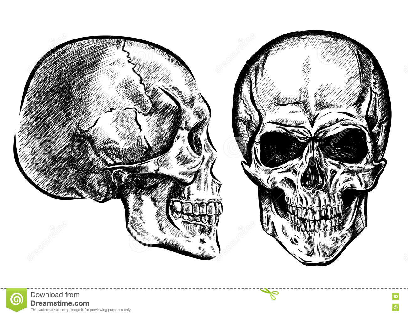 Hand Drawn Anatomy Skull With Different Tones And Lines Vector