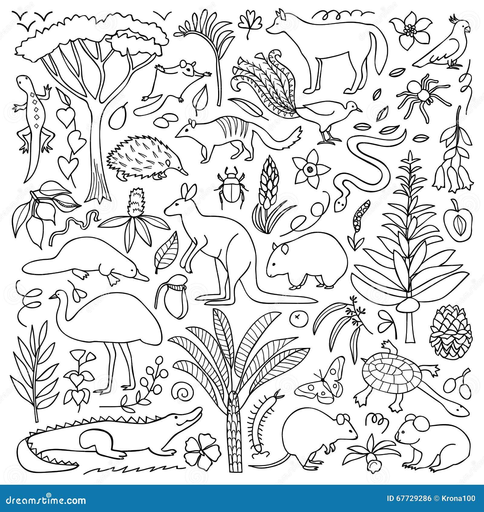 Echidna Stock Illustrations   Echidna Stock Illustrations - Map of us drawn by australian