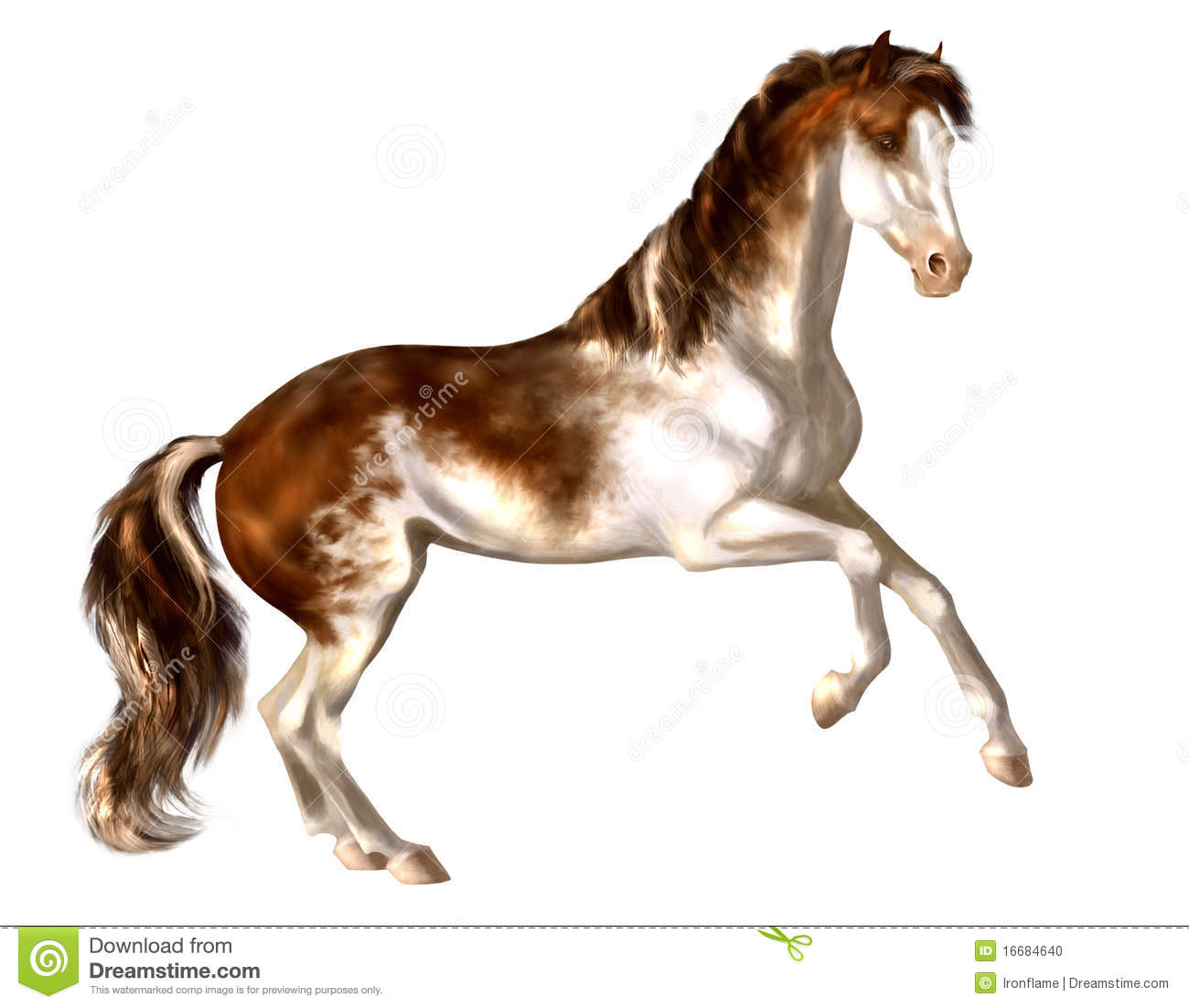 Hand drawn Bay Sabino Stallion Stock Photo Image 16684640