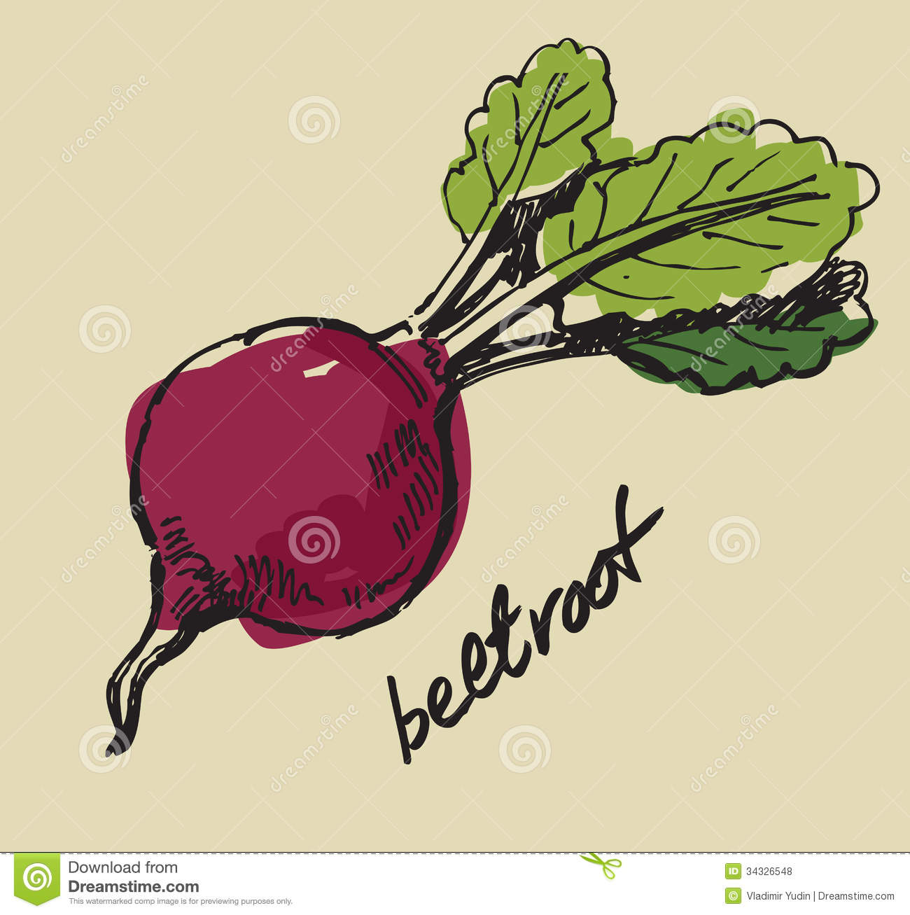 Hand drawn beet stock vector. Illustration of gourmet - 34326548 for Drawing Beetroot  153tgx