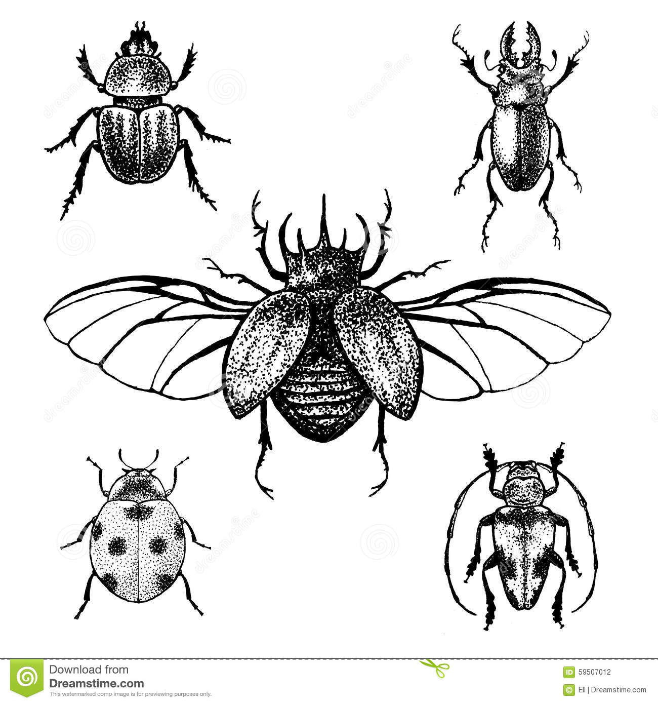 Line Drawing Insects : Hand drawn beetles set stock vector illustration of