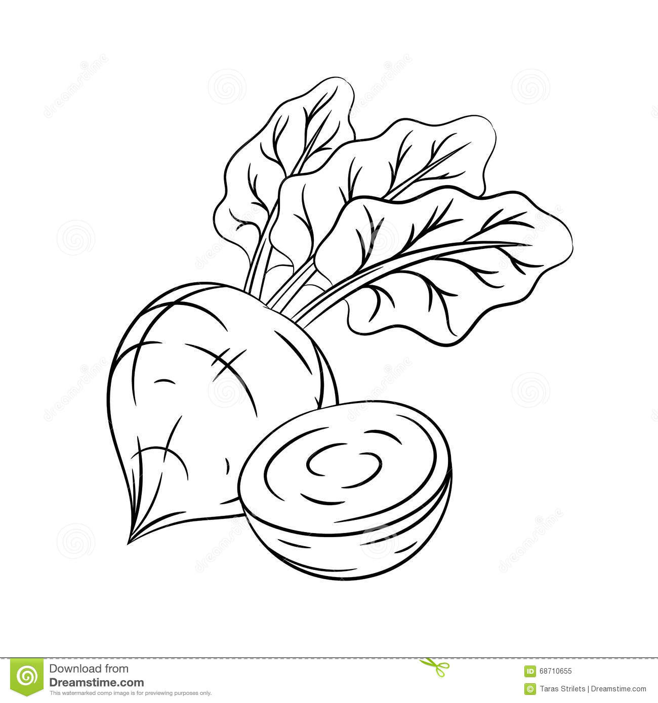 Hand Drawn Beetroot Sketches Stock Vector - Illustration of ... for Drawing Beetroot  104xkb