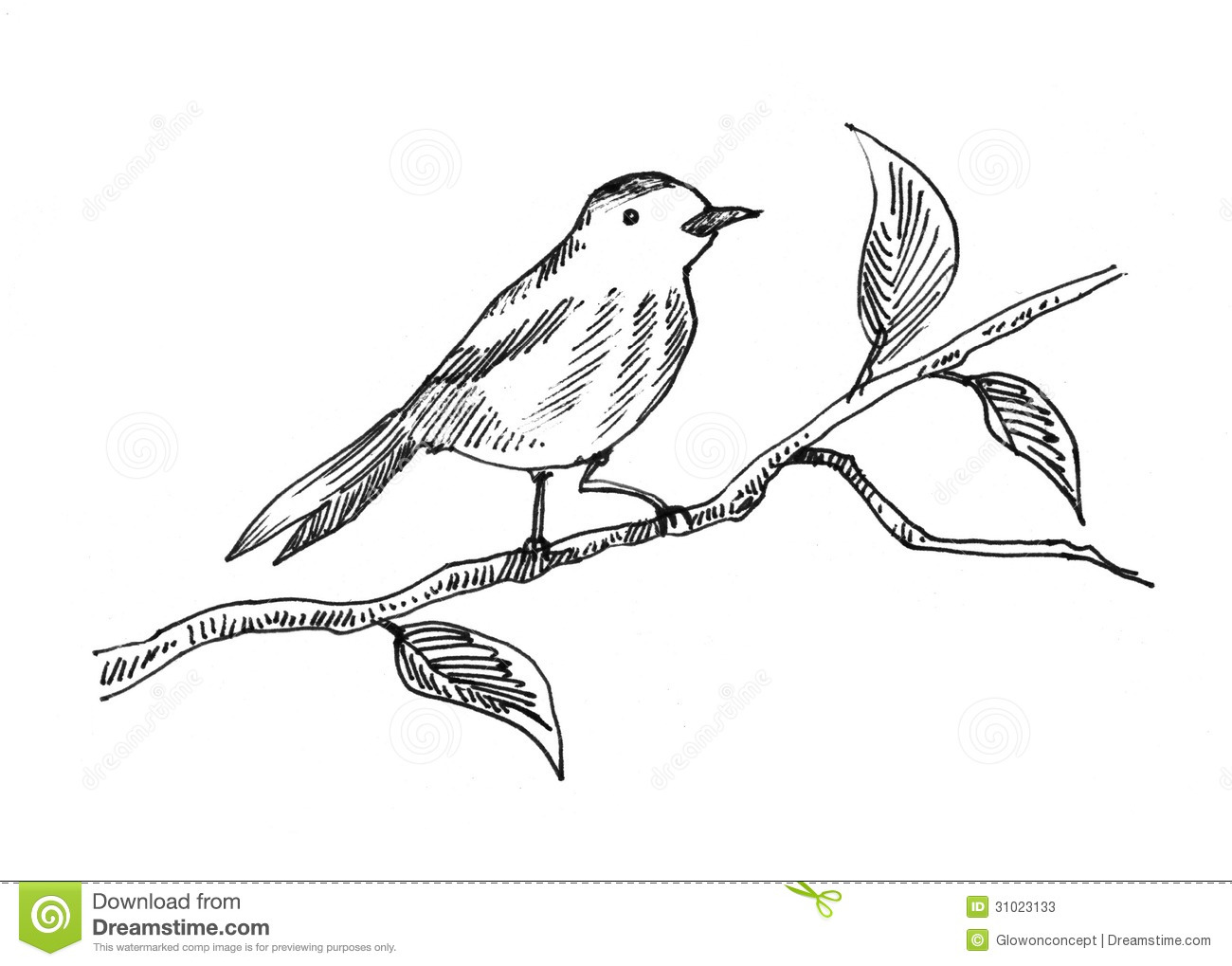 Hand Drawn Bird Stock Photos Image 31023133