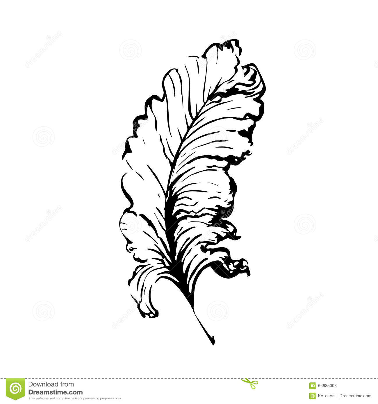 Vector hand with writing feather stock vector illustration of hand drawn bird feather symbol of knowledge writing and learning vector black and biocorpaavc Image collections