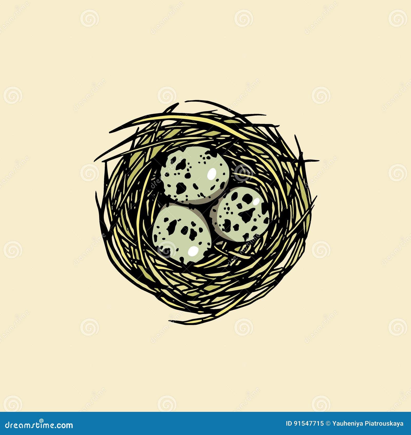 Download Hand Drawn Bird Nest Stock Vector Illustration Of Element