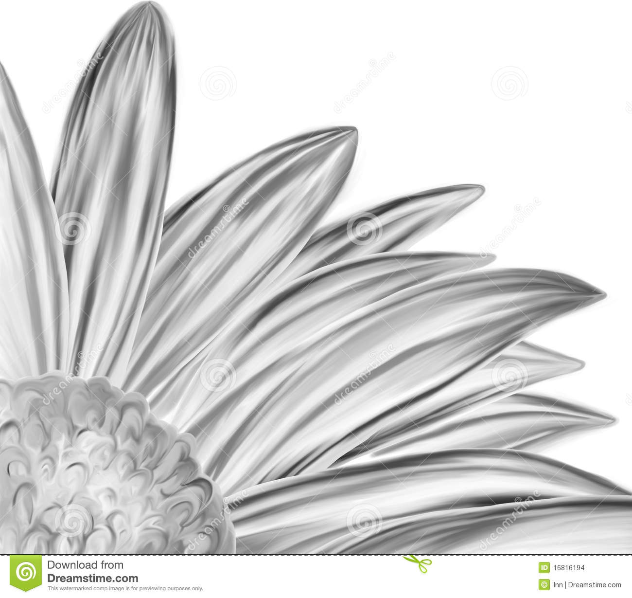 Hand Drawn Black White Flower Closeup Stock Illustration