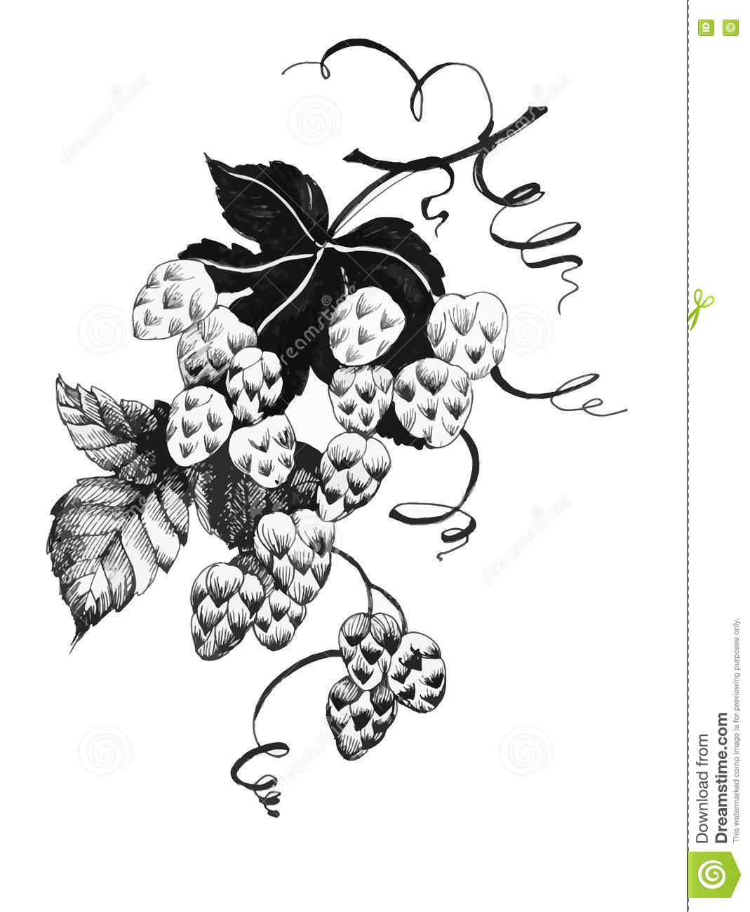 grapes harvest label black and white cartoon vector