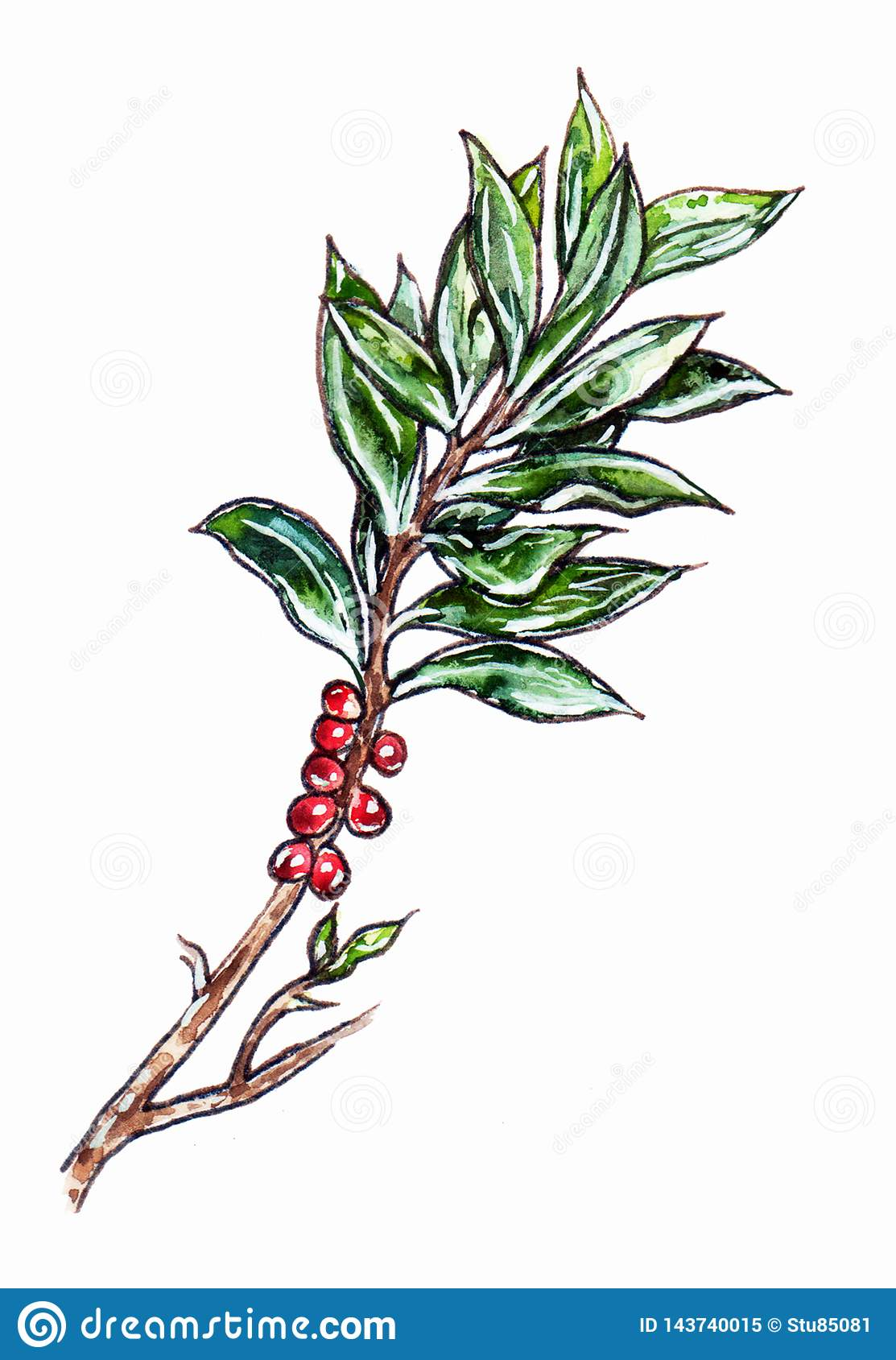 Hand drawn branch with green leaves and red berries