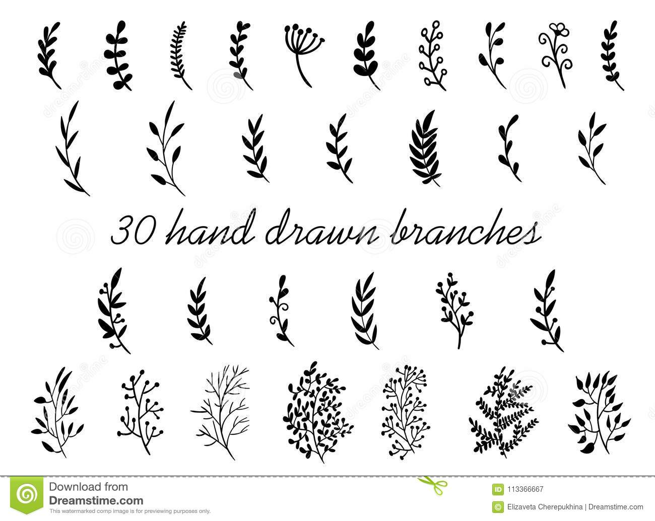Hand Drawn Branches With Leaves Isolated On White Background