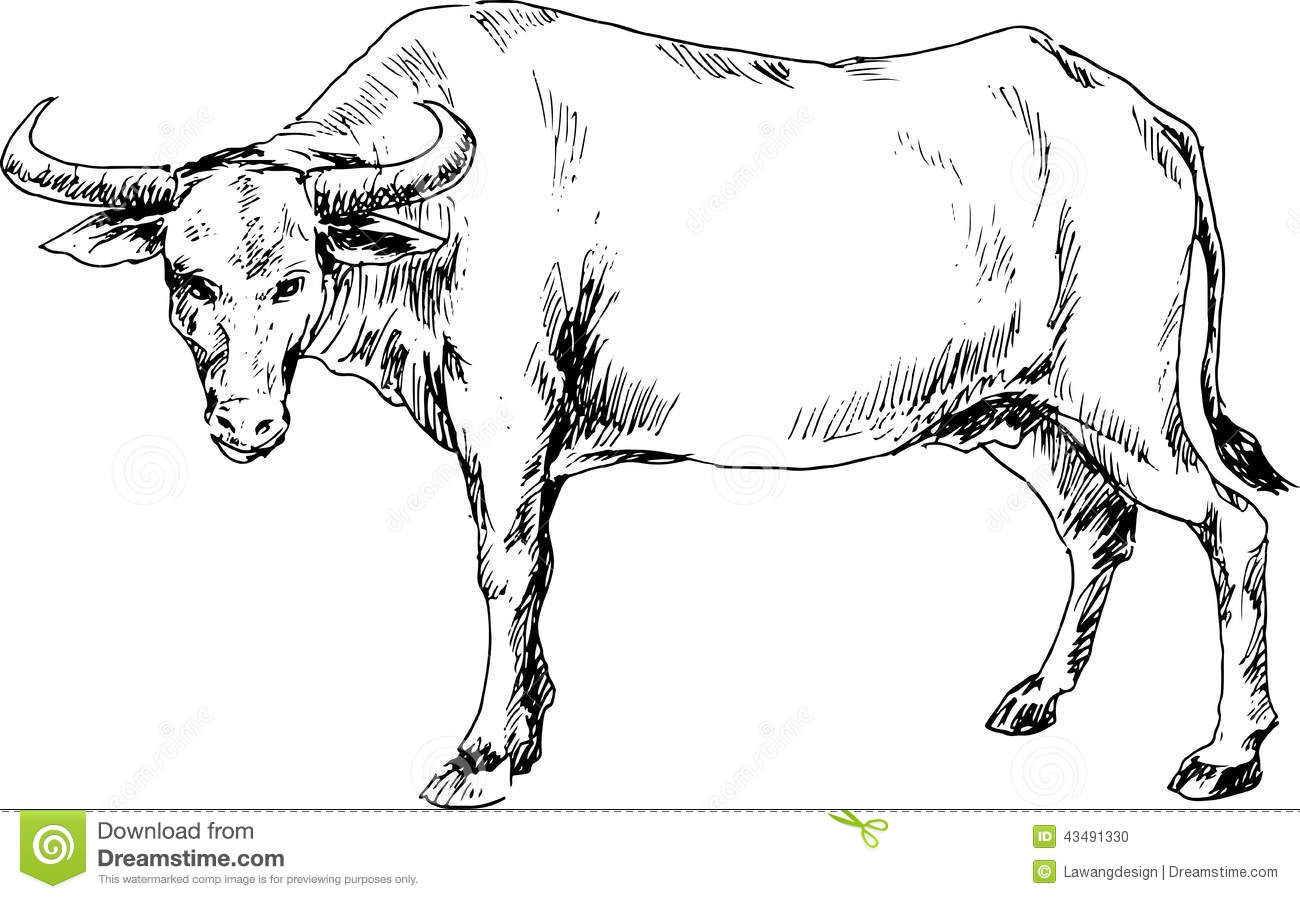 Hand Drawn Buffalo Stock Vector Image 43491330