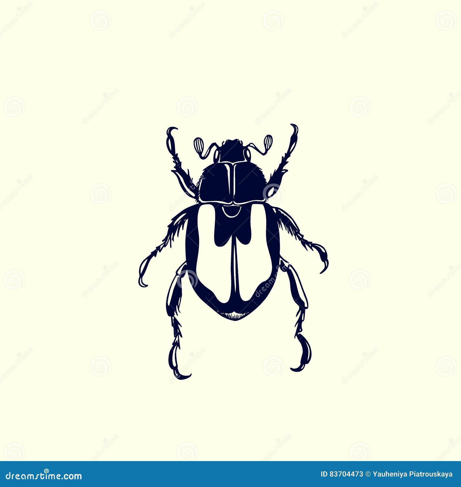 Hand Drawn Bug Stock Vector