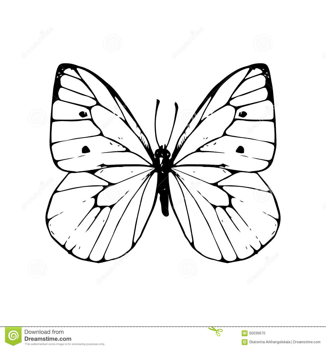 Line Drawing Butterfly : Hand drawn butterfly stock vector illustration of line