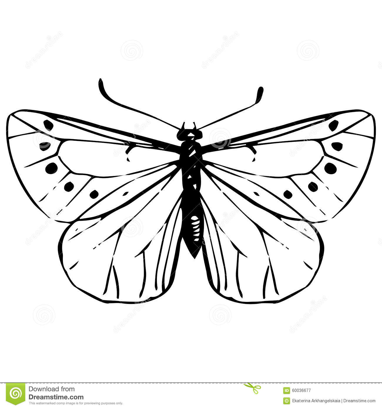 Drawing Vector Lines In Photo : Hand drawn butterfly stock vector image of spring linear