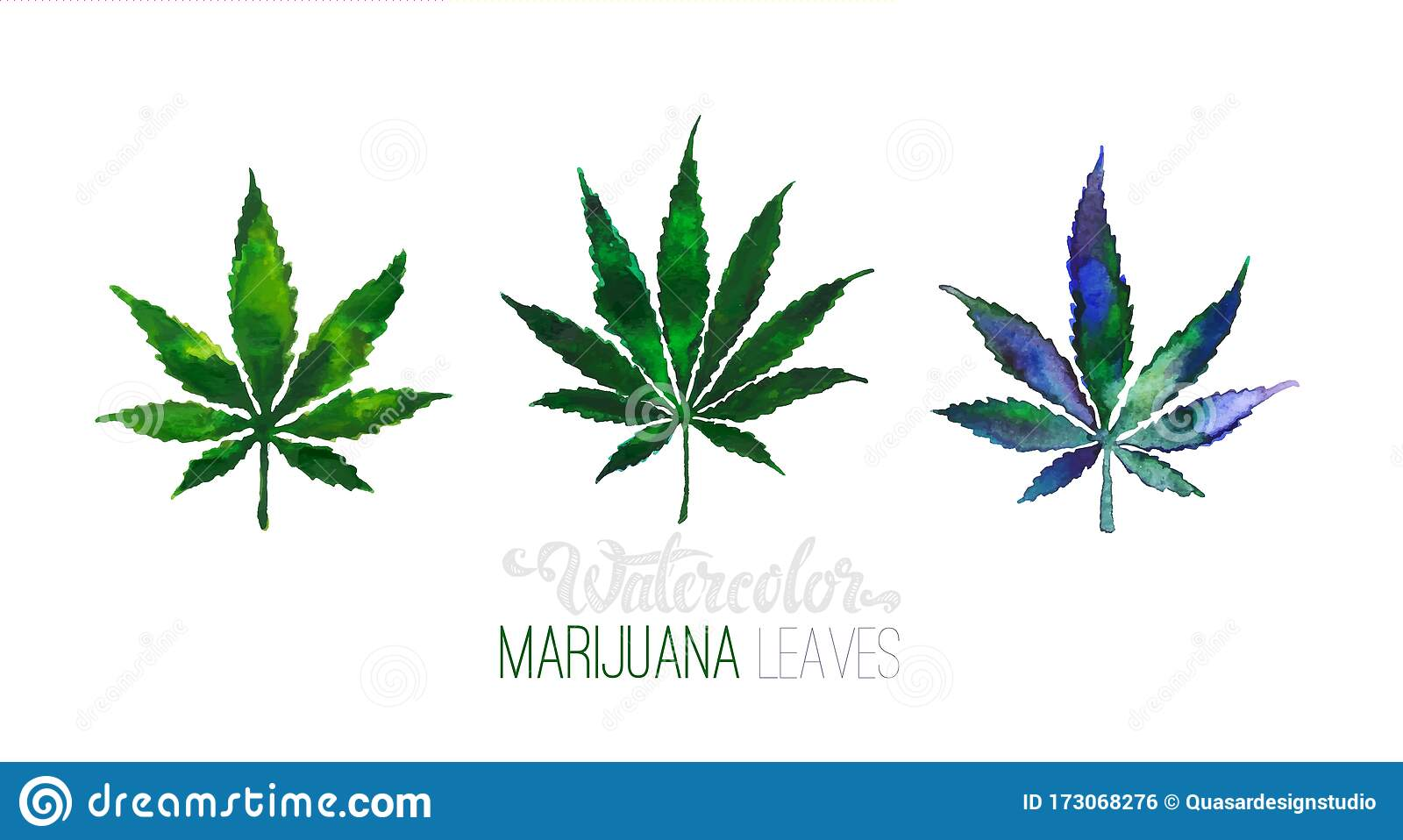 Cannabis Or Marijuana Leaves Vector Watercolor Stock Vector Illustration Of Herbal Leaves 173068276