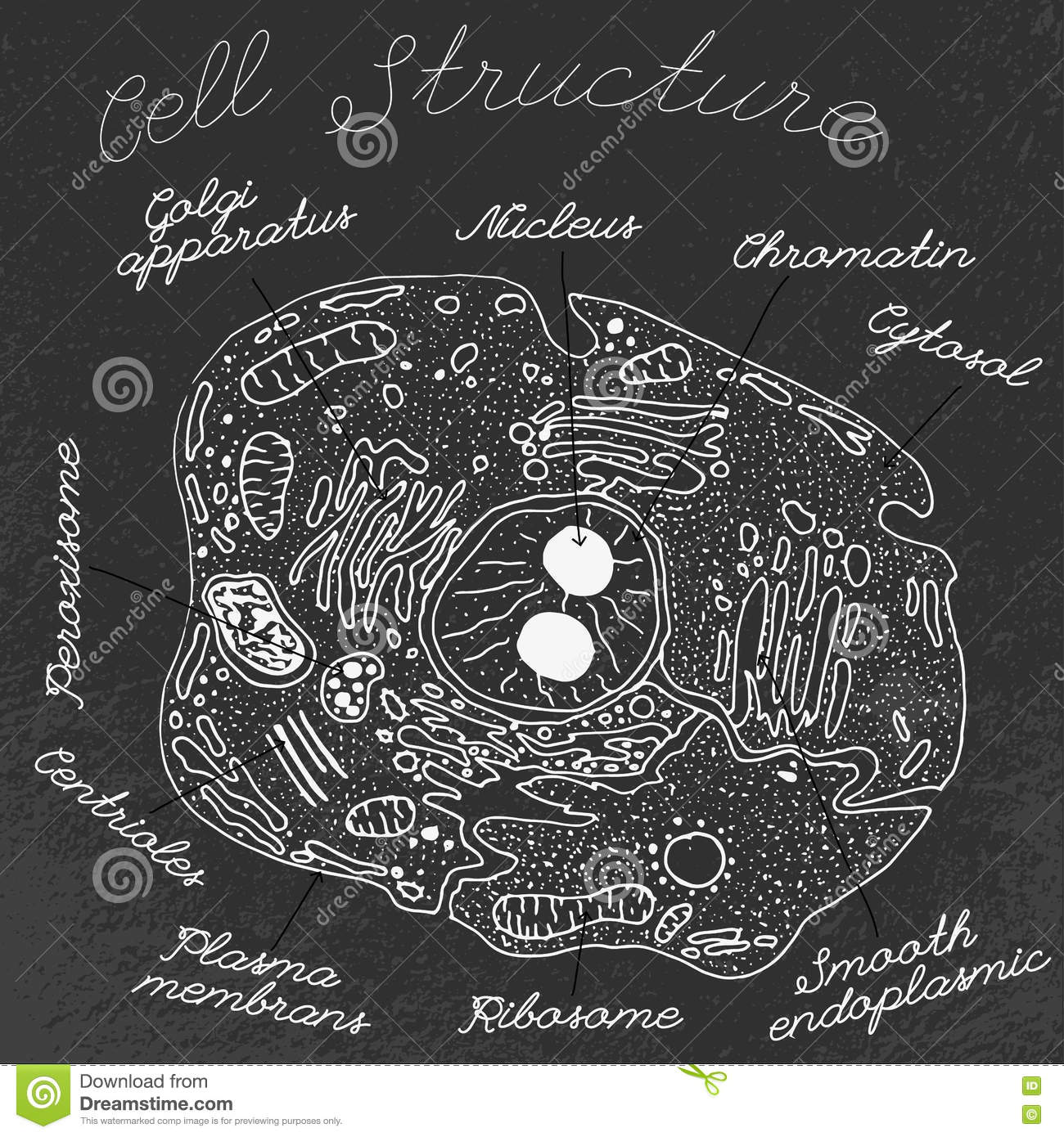 Ribosome Cartoons, Illustrations & Vector Stock Images ...