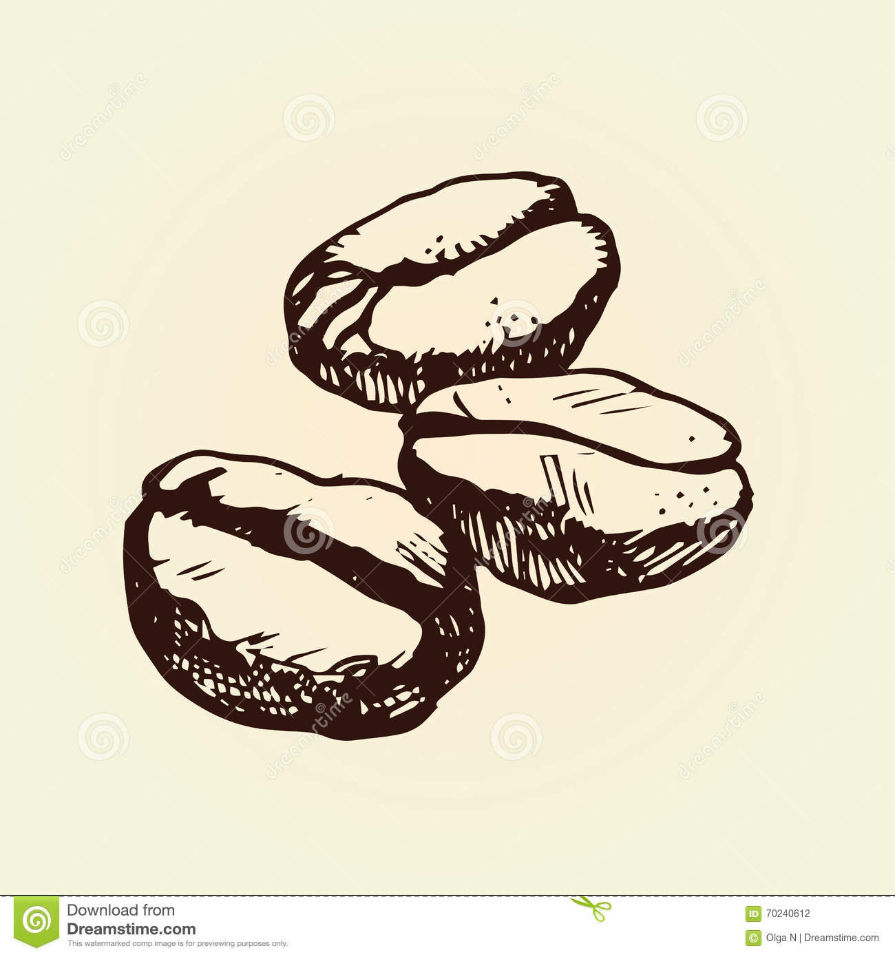 Hand drawn coffee beans outline illustration isolated for How to draw a coffee bean