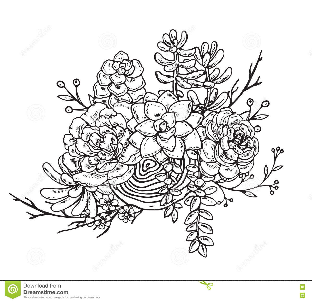 Hand Drawn Composition Of Succulent Plants Stock Vector