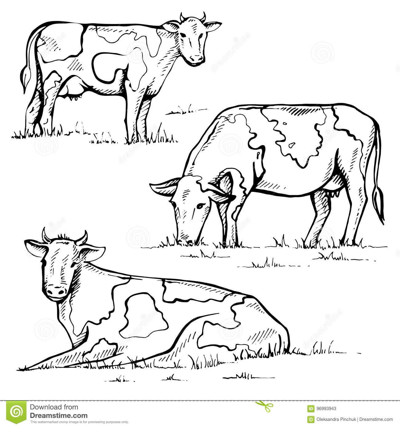 hand drawn cow on white background stock vector illustration of