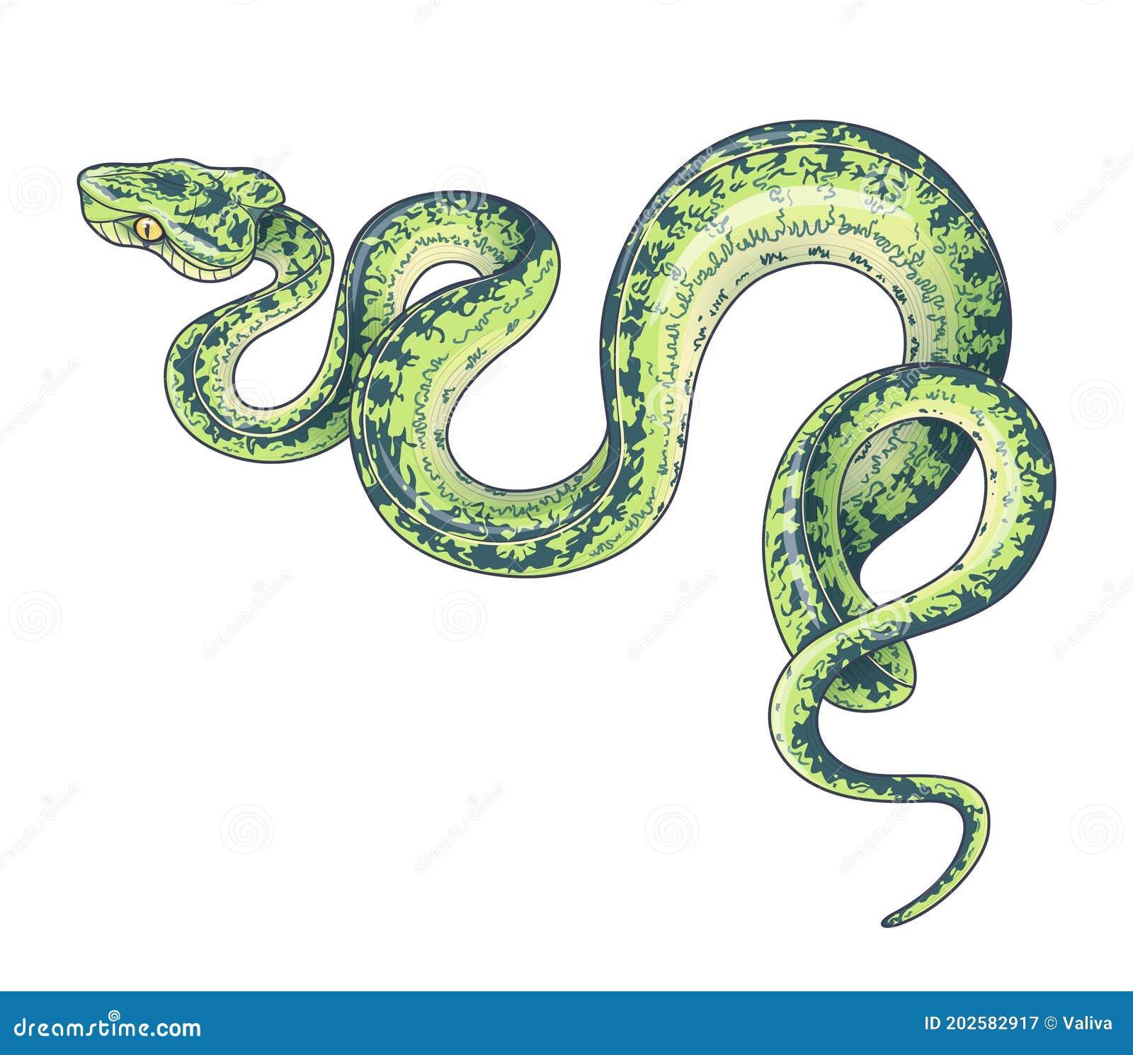 Green Garden Snake Stock Illustrations 568 Green Garden Snake Stock Illustrations Vectors Clipart Dreamstime