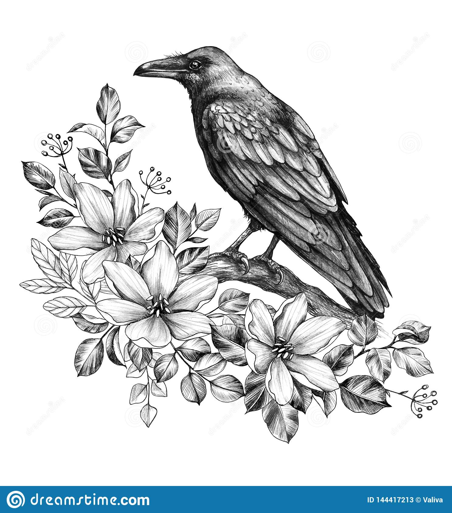 Raven with flowers pencil drawing stock illustration illustration