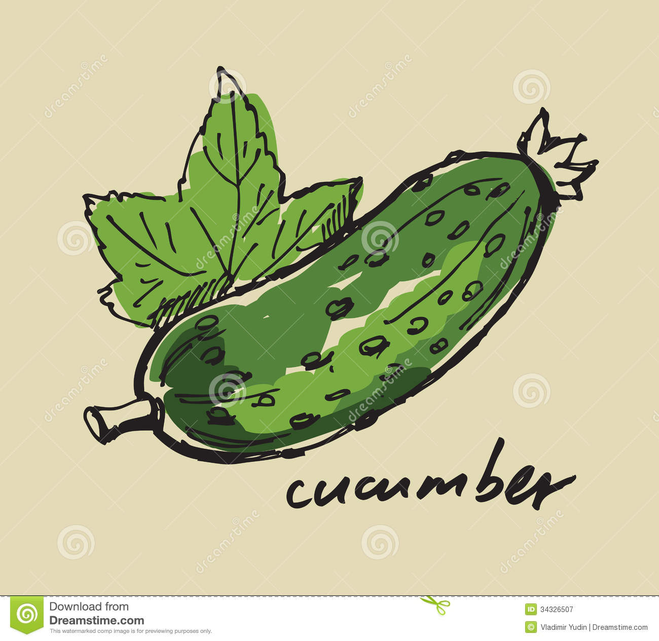 Hand drawn cucumber stock vector. Illustration of natural - 34326507 for Drawing Cucumber  55nar