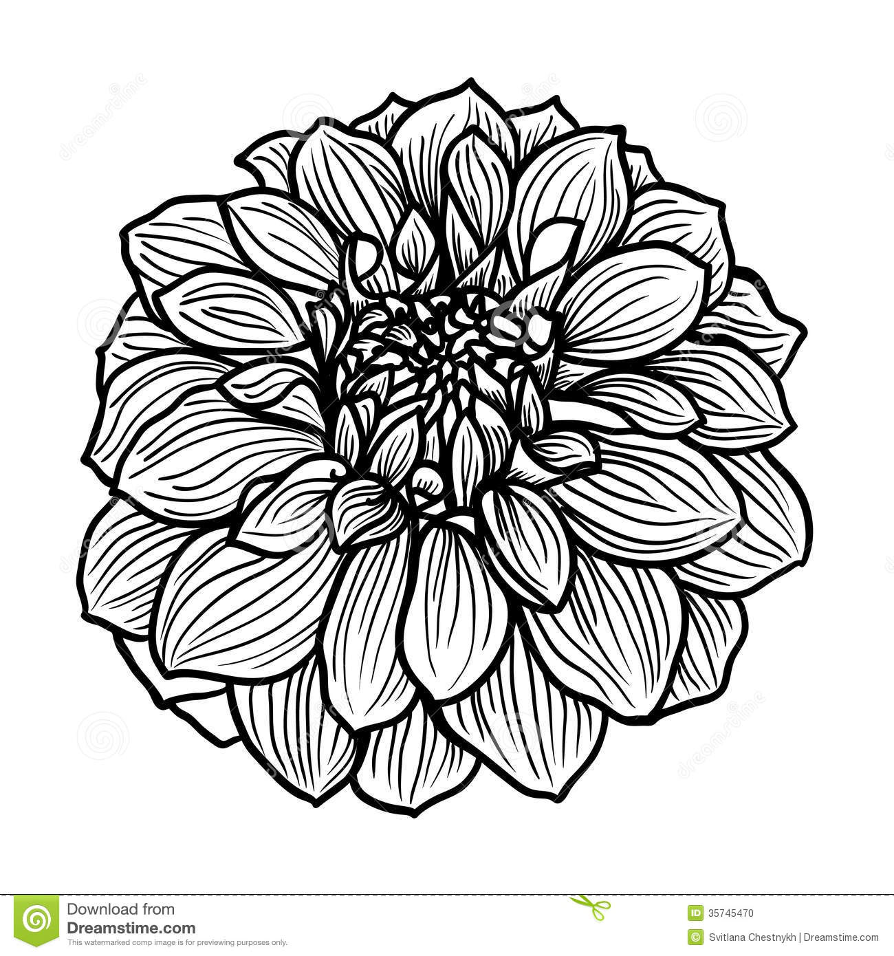 Hand drawn dahlia flower stock vector illustration of greeting download hand drawn dahlia flower stock vector illustration of greeting 35745470 mightylinksfo