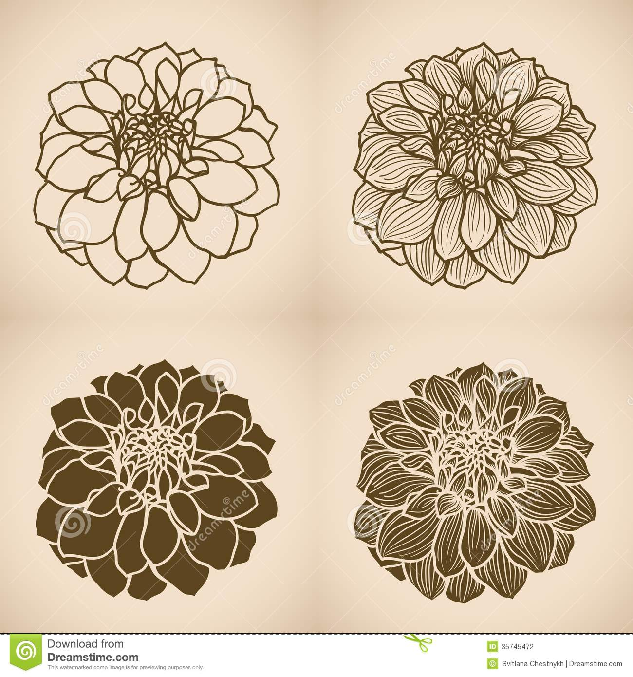 Hand drawn Dahlia flower stock vector. Illustration of collection ...