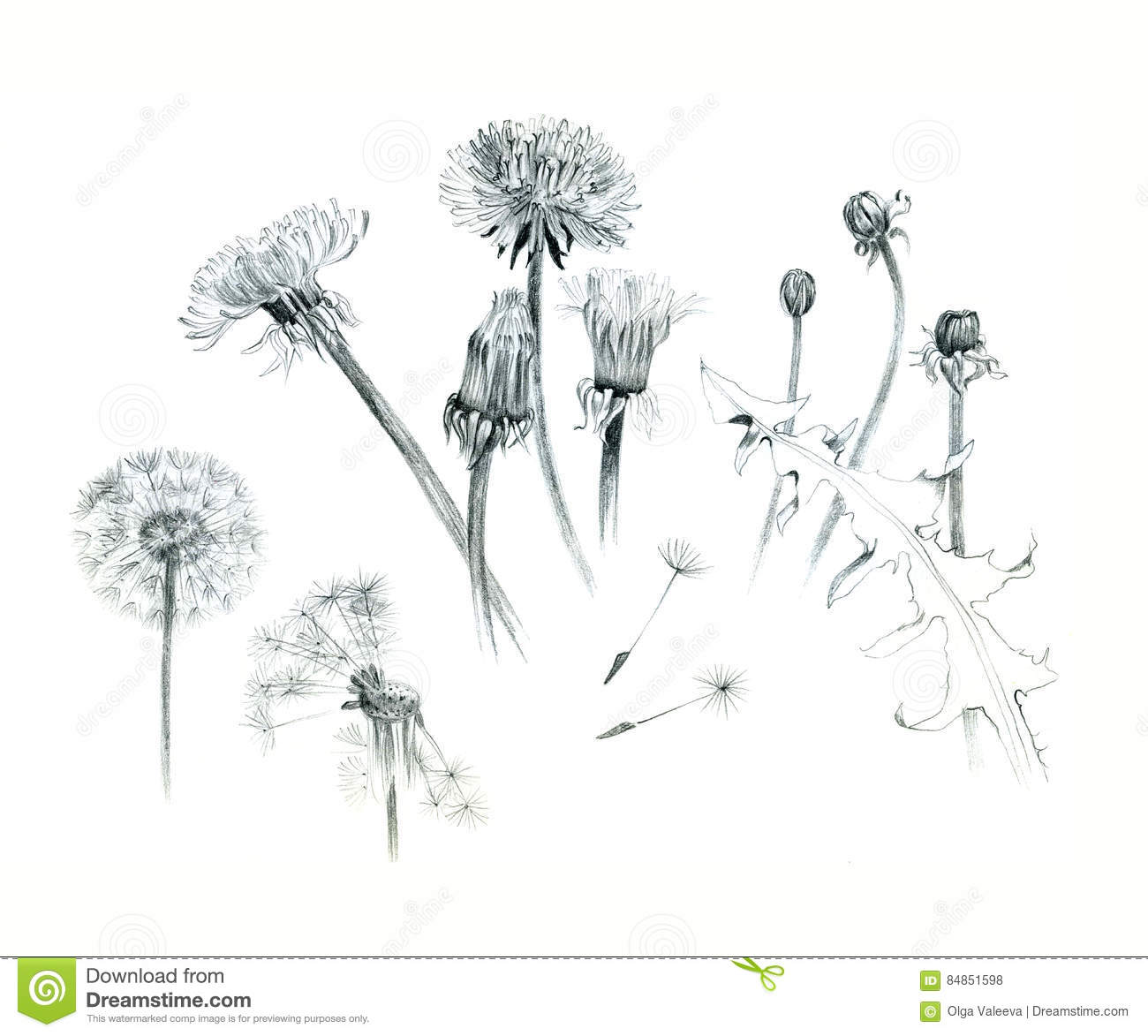 844436 Need A High Sierra Disk Image besides Lightbulb Creative Symbol 726752 moreover Ugm Vi likewise Aboriginal Trail besides Stock Illustration Hand Drawn Dandelions Illustration Graphite Isolated White Background Different Stages Dandelion Image84851598. on head plant