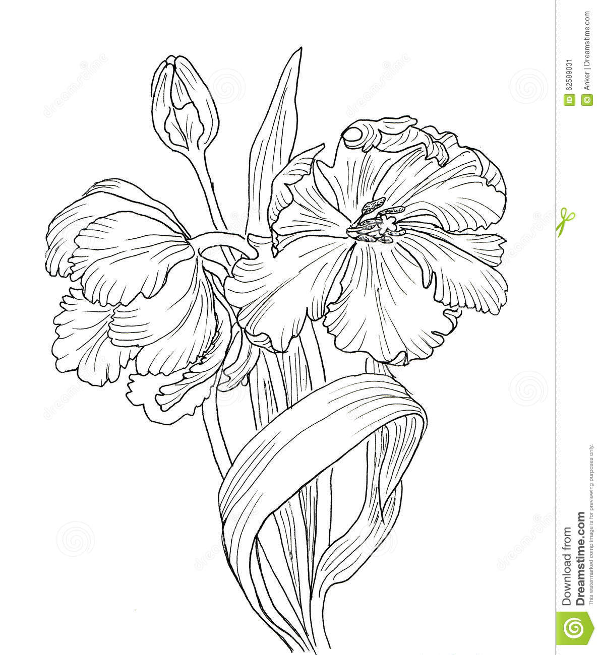 Line Drawing Tulip : Hand drawn decorative tulips for your design stock
