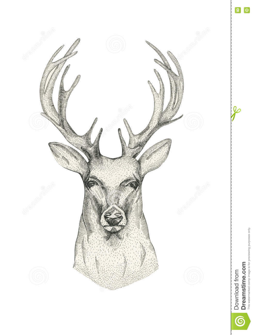 Hand drawn deer head with horns drawing animal sketch black an
